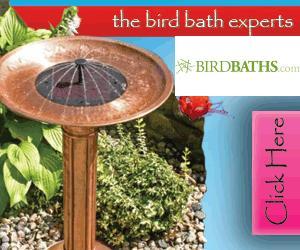 Shop BirdBaths.com Today!