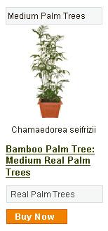 Shop RealPalmTrees.com Today!