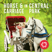 Central Park Horse and Carriage Tours