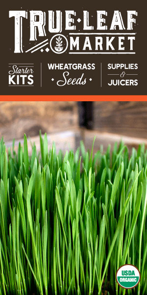 Check out our wheatgrass products at True Leaf Market