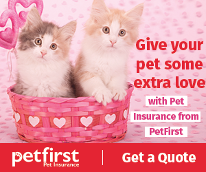PetFirst Pet Insurance. Insurance for kittens and cats